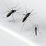3rd adult died from Zika virus in Brazil: health ministry