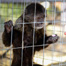 49 abused and malnourished monkeys rescued from Johannesburg