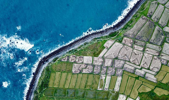 Paddy fields juxtapose with Pacific coastline of Hualien, SE China's Taiwan