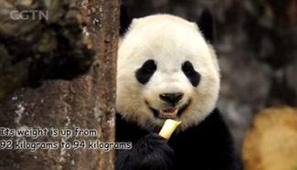 Panda cub Bao Bao makes debut in China